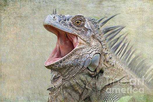 Heiko Koehrer-Wagner - Green Iguana