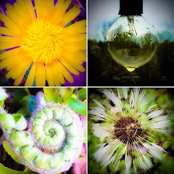 Green Nest by Damini Celebre