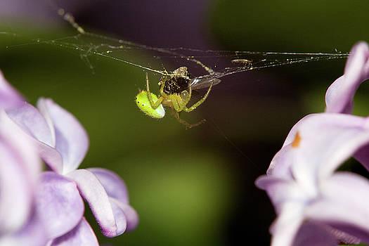 Green spider by Jouko Mikkola