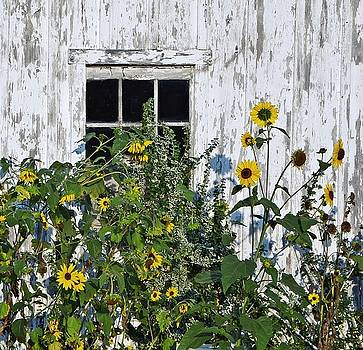 Growing Panes by Stephanie Calhoun