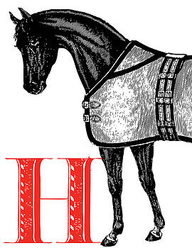 H Horse by Thomas Paul