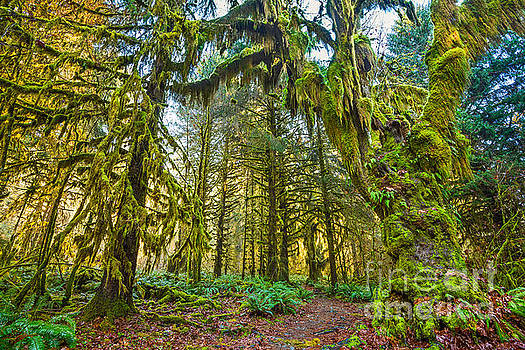 Jamie Pham - Hall of Mosses in the Hoh Rainforest.