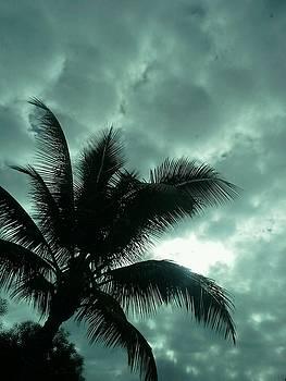 Hawaii Sky by Sonya Wilson