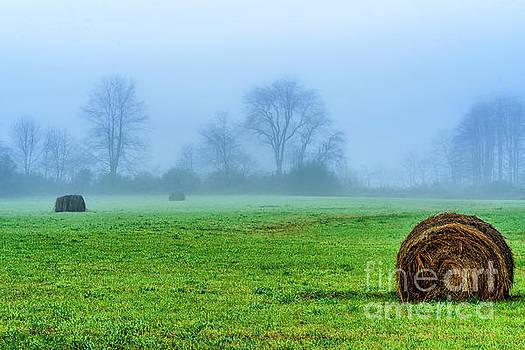 Hay Bales in Fog by Thomas R Fletcher