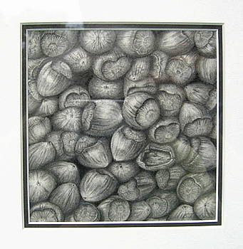 Hazelnuts by Elizabeth H Tudor