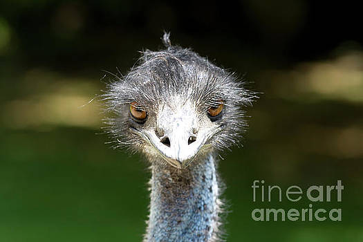 Head of ostrich by Patricia Hofmeester