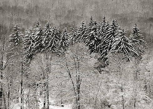 Hemlocks Over Whaley Lake  by Jeremy Wolff
