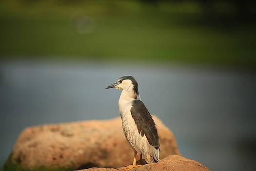 Heron by Byron Fair