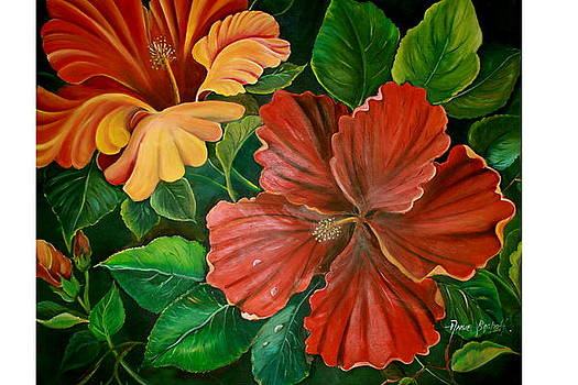Hibiscus by Ansie Boshoff