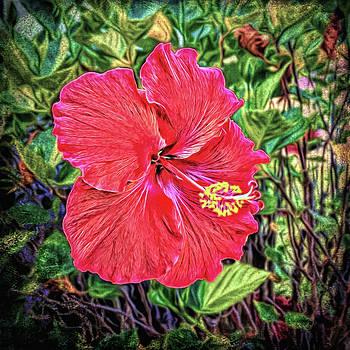Hibiscus Flower by Lewis Mann