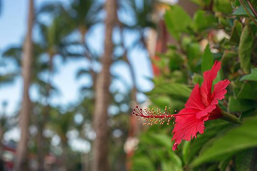 Hibiscus Flower. Shallow DOF by Valentin Valkov