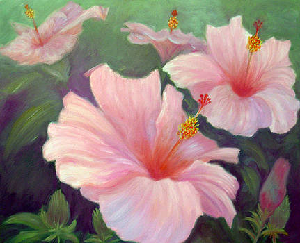 Hibiscus by Irene Hurdle