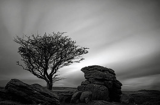 Holwell Tor and Lone tree on Dartmoor by Pete Hemington