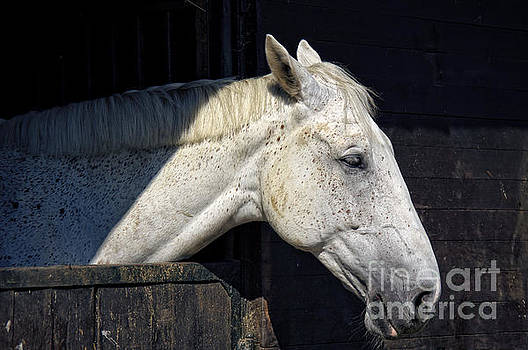 Angela Doelling AD DESIGN Photo and PhotoArt - Horse