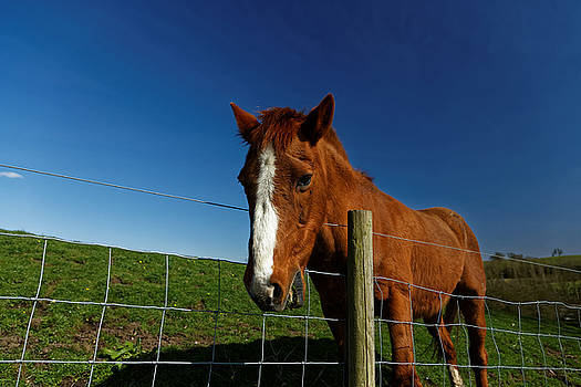 Horse by David Harding