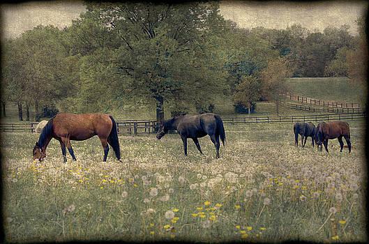 Horse Farm by Eleanor Bortnick