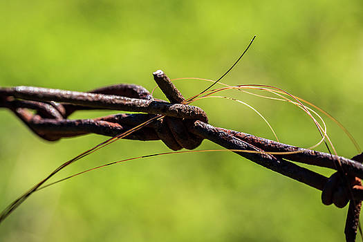 Horse Hair by Jay Stockhaus
