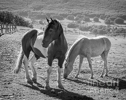 Delphimages Photo Creations - Horses