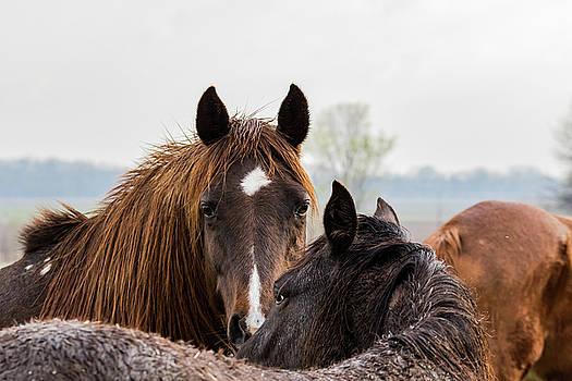 Horses by Jay Stockhaus