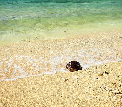 Tim Hester - Hot Summer Beach