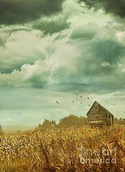 Mythja Photography - House in corn field