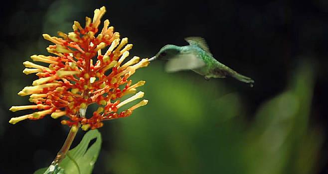 Hummingbird by Digital Art Cafe