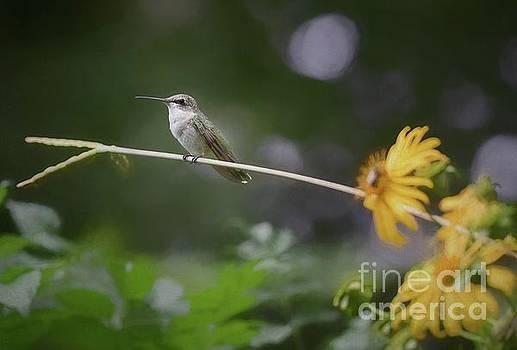 Hummingbird by Warrena J Barnerd