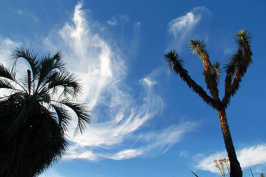 @Huntington Gardens Los Angeles by Jim McCullaugh