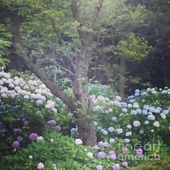 Hydrangea flowers  by Sobajan Tellfortunes