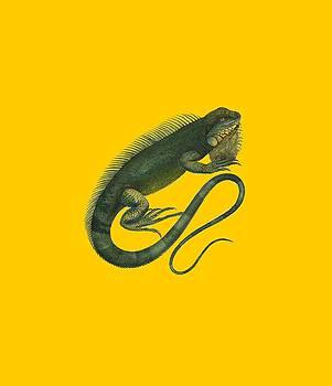 Iguana by Sergey Lukashin