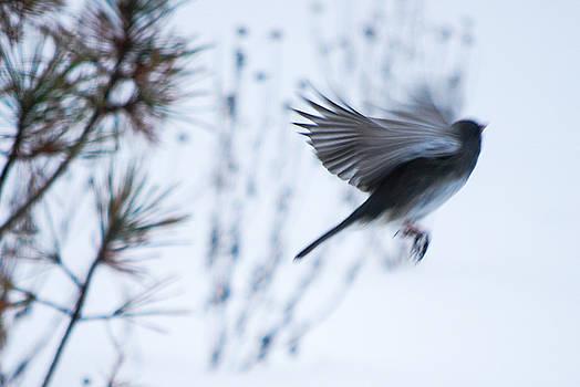 In Flight by Patricia Gapske