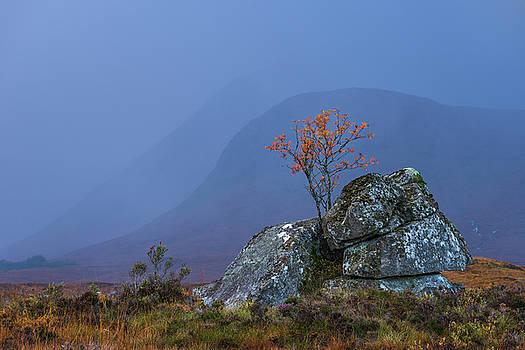 Incoming rain by David Taylor