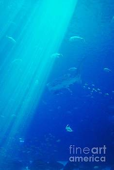 Into the Deep Blue by Jessica Wallace
