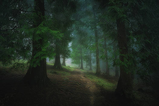 Into the forest by Mikel Martinez de Osaba