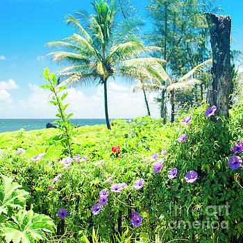 Ipomoea Keanae Morning Glory Maui Hawaii by Sharon Mau