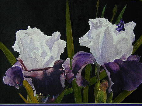 Iris by Dwight Williams