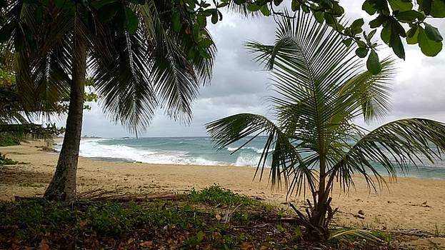 Isabela Puerto Rico by Sheryl Chapman Photography
