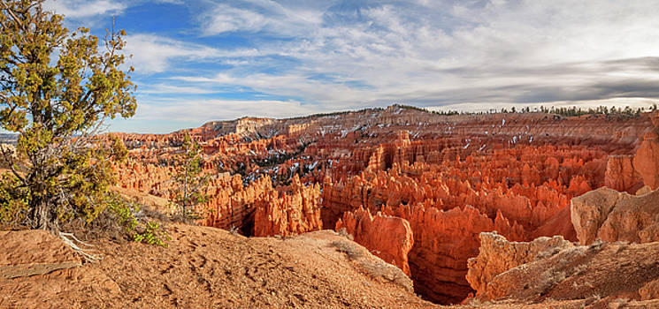 Isolated tree at Sunset Point - Bryce Canyon by Daniela Constantinescu