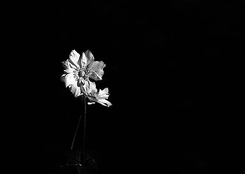 Japanese Anemone in Black and White by Brooke T Ryan