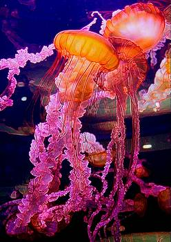 Jellyfish by Michael Todd