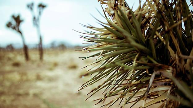 Joshua Tree by Smoked Cactus