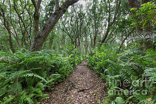 Jozani Forest, Zanzibar, Tanzania by Mariusz Prusaczyk