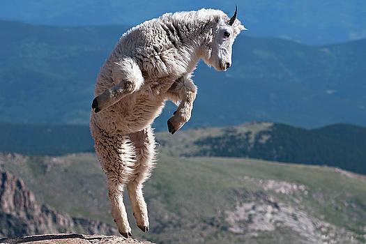 Jump by Gary Lengyel