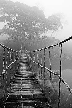 Jungle Journey Black and White by Skip Nall
