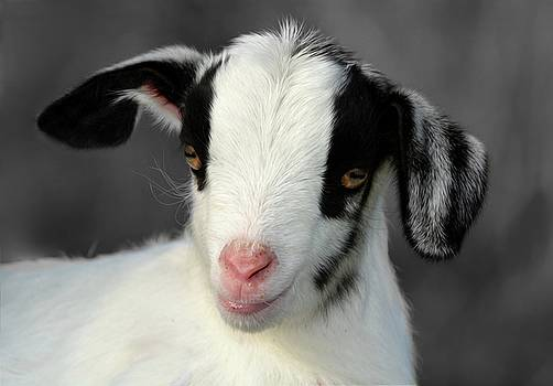 Kid Goat by Savannah Gibbs