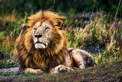King Me by Cory Dewald
