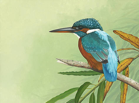 Kingfisher by Clive Meredith