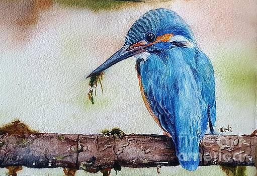 Kingfisher by Patricia Pushaw