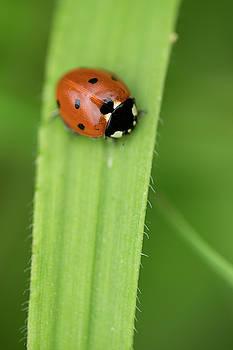 Ladybug by Ignacio Leal Orozco
