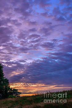 Lavender Dawn  by Thomas R Fletcher